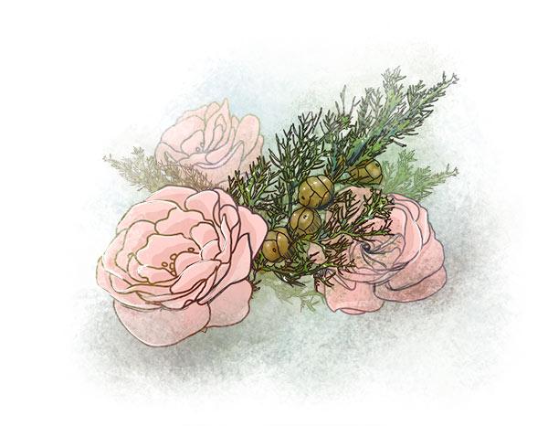 > roses Queen Elizabeth